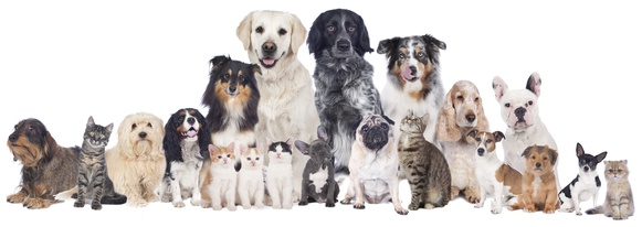 Food Compatibility Program for Pets
