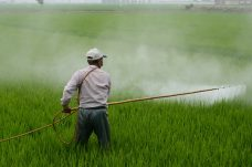 Pesticide and insecticide test